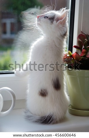 Tiny kitten sitting on the windowsill