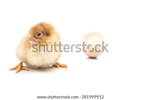 tiny little chick near egg - stock photo