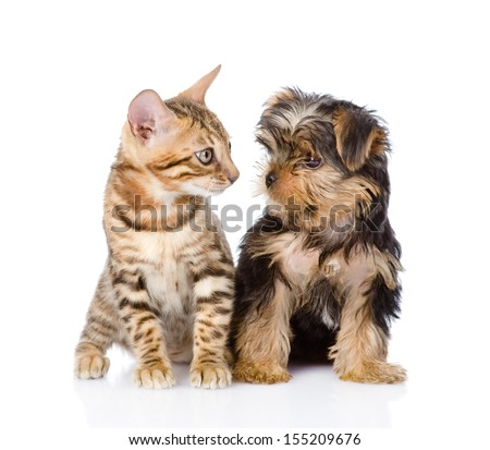 tiny little kitten and puppy looking at each other. isolated on white background - stock photo