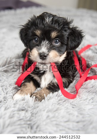 Tiny Puppy on Fluffy Blanket - stock photo