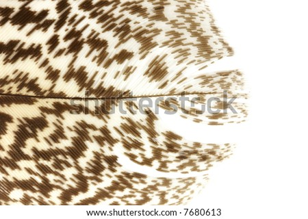 Tip of a feather - stock photo