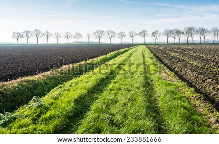 Tire tracks in the grass strip between two plowed fields and in the background a row of bare trees on a sunny day in the fall season. - stock photo