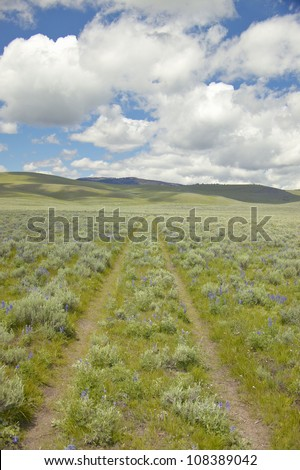 Tire tracks through spring flowers of Centennial Valley near Lakeview, Montana - stock photo