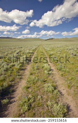 Tire tracks through spring flowers of Centennial Valley near Lakeview, MT - stock photo