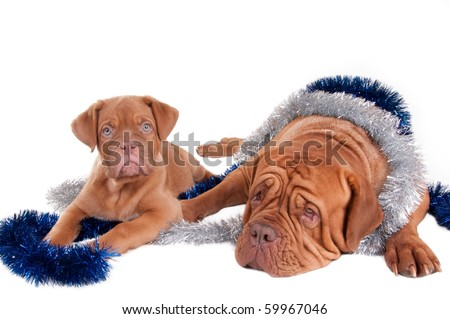 Tired mother dog and her puppy waiting for Christmas - stock photo