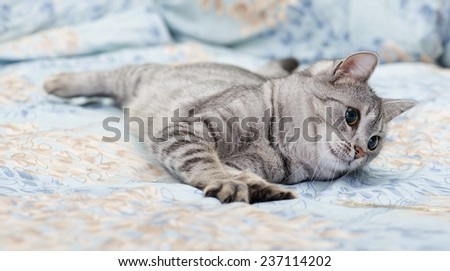 Tired young cat on a sofa, curious cat, kitten, cat on a sofa - stock photo