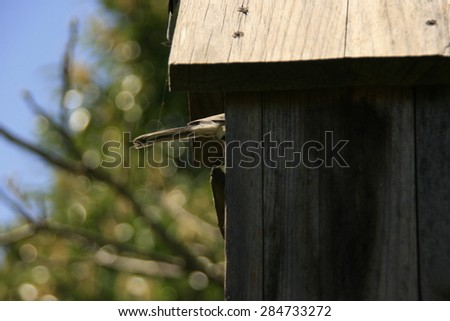 Tit in a bird house - stock photo