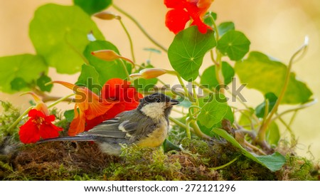 titmouse is standing on moss with flower and leaves - stock photo
