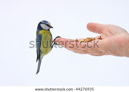 titmouse on hand - stock photo