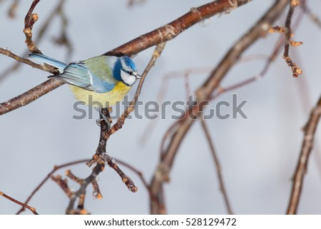 Titmouse sitting on a branch