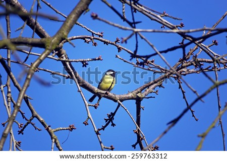 titmouse sitting on a twig - stock photo