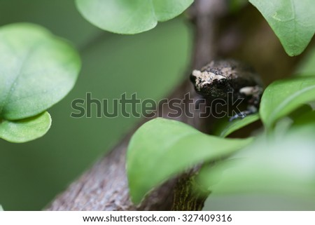 Toad children - stock photo