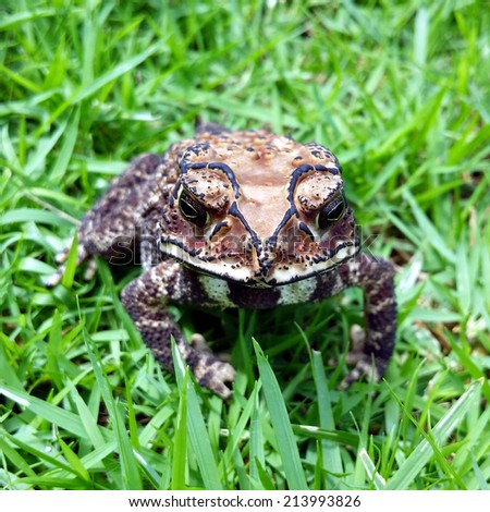 Toad close up - stock photo