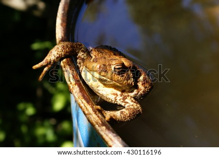 Toad floating in a barrel with water