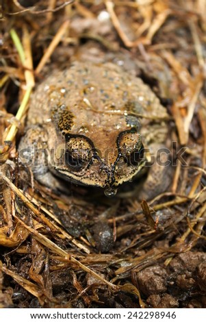 toad frog - stock photo