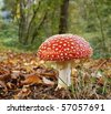 toadstool at the forest - stock photo