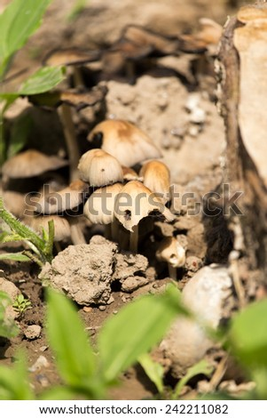 toadstool mushroom in nature - stock photo