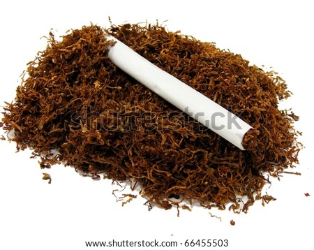 Tobacco and Cigarette - stock photo