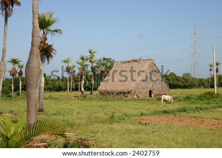 Tobacco dry House in Cuba