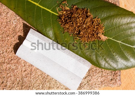 Tobacco for smoking on the sheet in the sun - stock photo