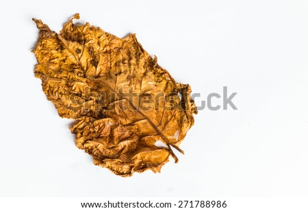 Tobacco leaf on white background - stock photo