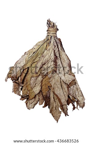 Tobacco leaves drying on white background - stock photo