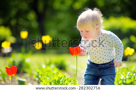 Toddler boy smelling red tulip in the garden at the spring or summer day - stock photo