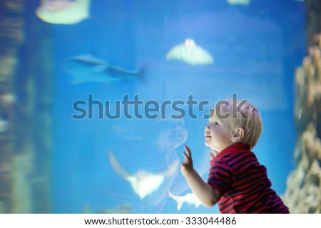 Toddler boy watches fishes in aquarium  - stock photo