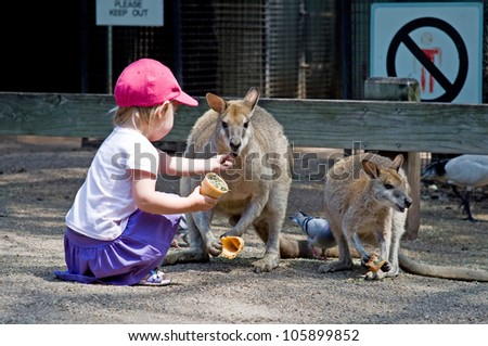 Toddler girl feeding a kangaroo with dried grass - stock photo