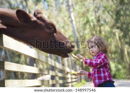 Toddler Girl Feeding Cow at Farm - stock photo