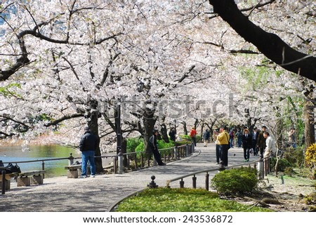 TOKYO, JAPAN - APRIL 3 : Ueno Park in spring season with Cherry Blossom taken on April 3, 2007 - stock photo