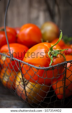 Tomates in a basket - stock photo