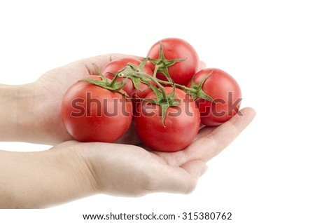 Tomato branch in hand on a white background - stock photo