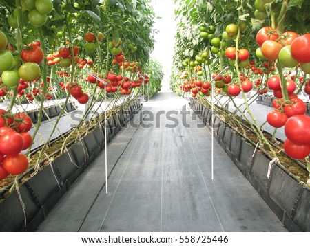 Greenhouse stock images royalty free images vectors for Terrace krishi