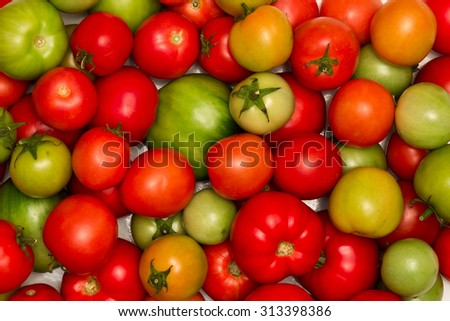 tomatoes, background of different colored tomatoes on white background, large and small tomatoes, ripe and unripe tomatoes - stock photo