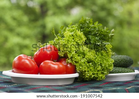 Tomatoes, cucumbers, lettuce and parsley on a table covered with plaid on a background of green trees. - stock photo