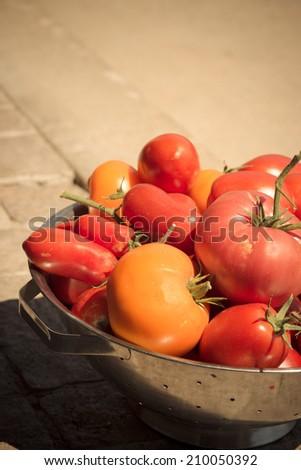 Tomatoes, fresh-picked from homemade garden. - stock photo