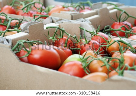 Tomatoes in cartons; harvesting