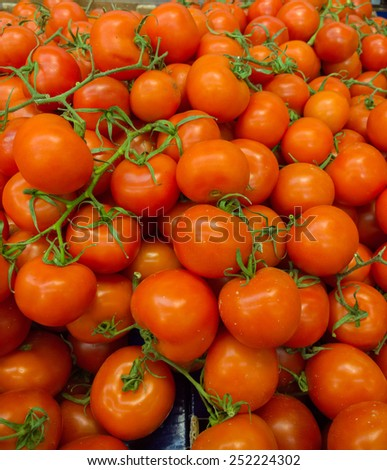 Tomatoes in the supermarket. - stock photo