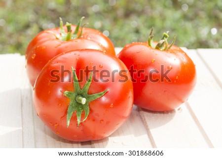 Tomatoes on wooden table on sunlight - stock photo