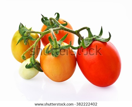 Tomatoes red , green and yellow on white background - stock photo