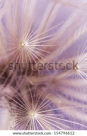 Toned abstract dandelion seeds