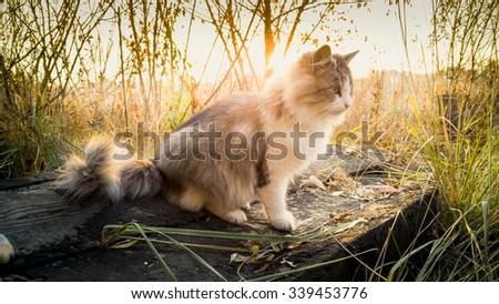 Toned photo of cat sitting on log at lake at sunrise - stock photo