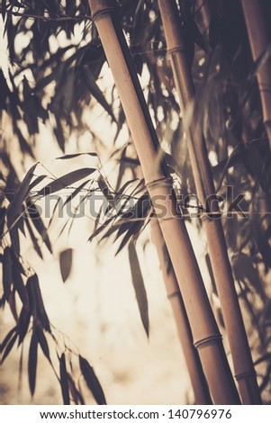 Toned picture of a bamboo plant - stock photo