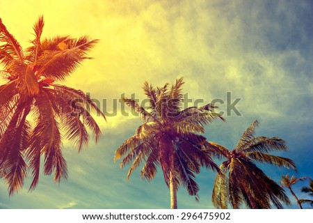 toning vintage instagram under palm trees against a blue sky with clouds in the Caribbean Maldivian Hawaii - stock photo