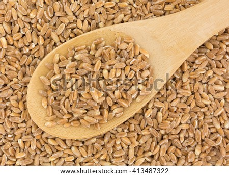 Top close view of a portion of organic farrow grain on a wood spoon atop more grain.