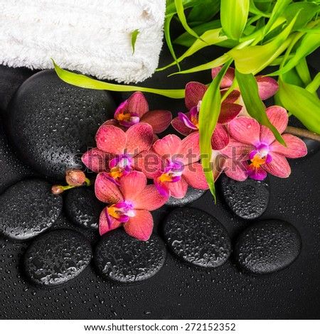 top down spa concept of blooming twig red orchid flower, phalaenopsis, bamboo with dew and towels on zen basalt stones, closeup - stock photo