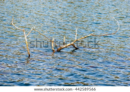 Top down view on old large dead tree branches in lake with subtle waves with copy space - stock photo