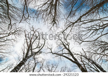 Top of winter trees with blue sky and clouds.