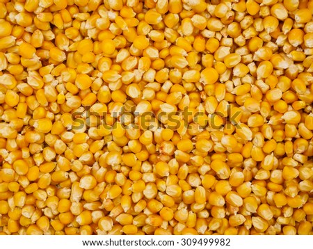 Top view at the heap of raw corn seeds
